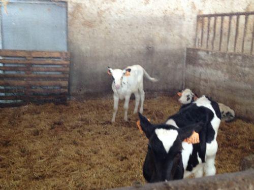 Terreno Agricolo in vendita a Noceto, 9999 locali, prezzo € 6.500.000 | CambioCasa.it