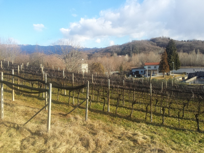 Terreno Agricolo in vendita a Reana del Rojale, 9999 locali, zona Zona: Zompitta, prezzo € 49.170 | CambioCasa.it