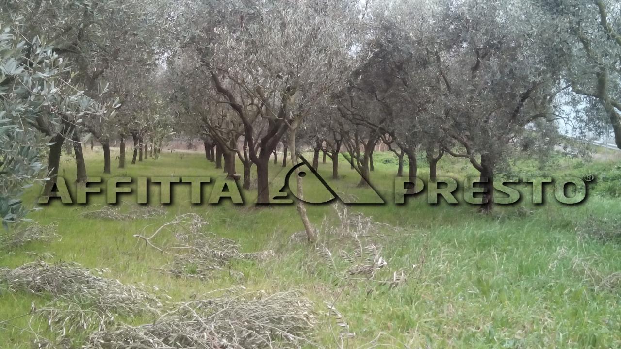 Terreno Agricolo in vendita a Pisa, 9999 locali, zona Località: S.Ermete, Trattative riservate | Cambio Casa.it