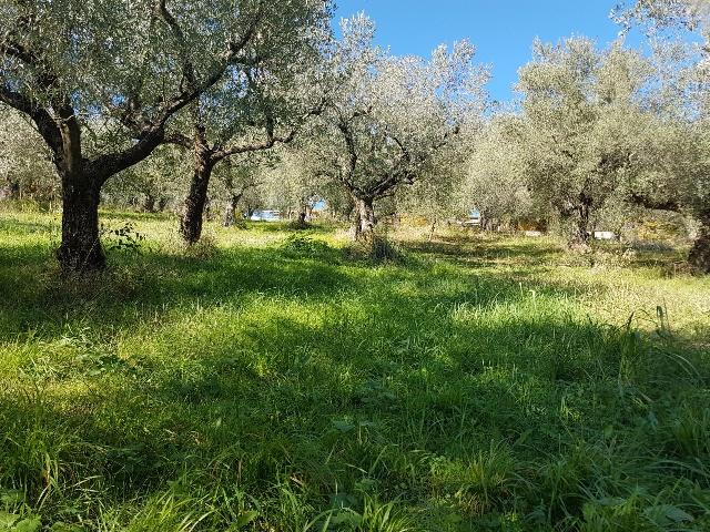Terreno Agricolo in vendita a San Polo dei Cavalieri, 9999 locali, prezzo € 15.000   CambioCasa.it