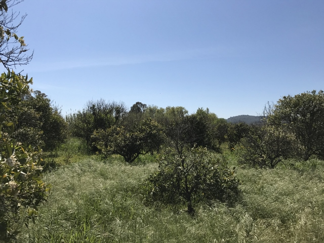 Terreno Agricolo in vendita a Tortolì, 9999 locali, Trattative riservate | CambioCasa.it