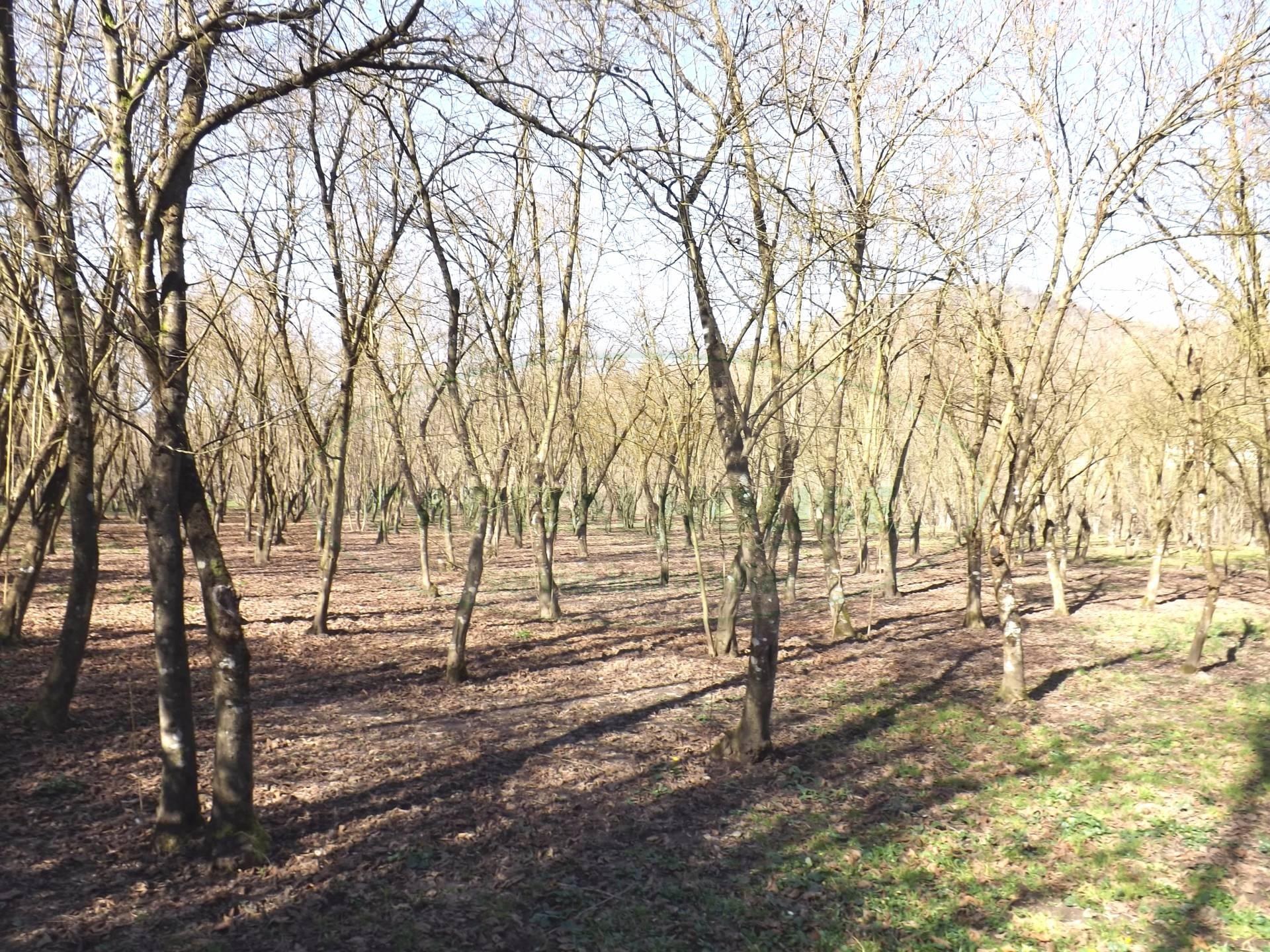 Terreno Agricolo in vendita a Prata di Principato Ultra, 9999 locali, prezzo € 11.000 | CambioCasa.it