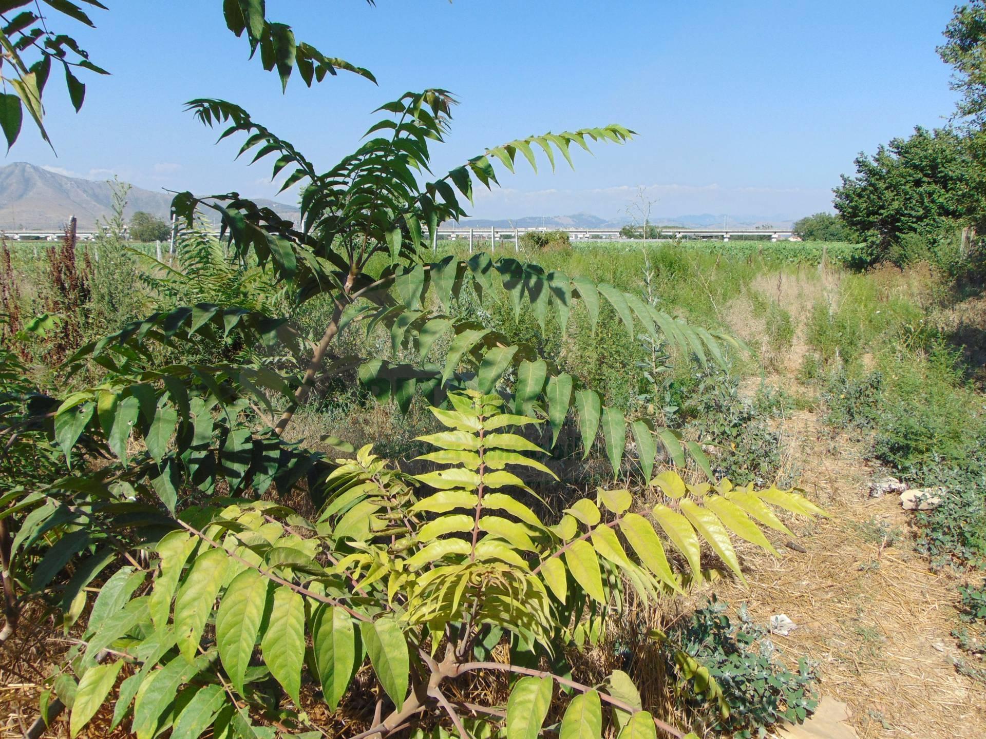 Terreno Agricolo in vendita a Santa Maria Capua Vetere, 9999 locali, prezzo € 23.000 | CambioCasa.it