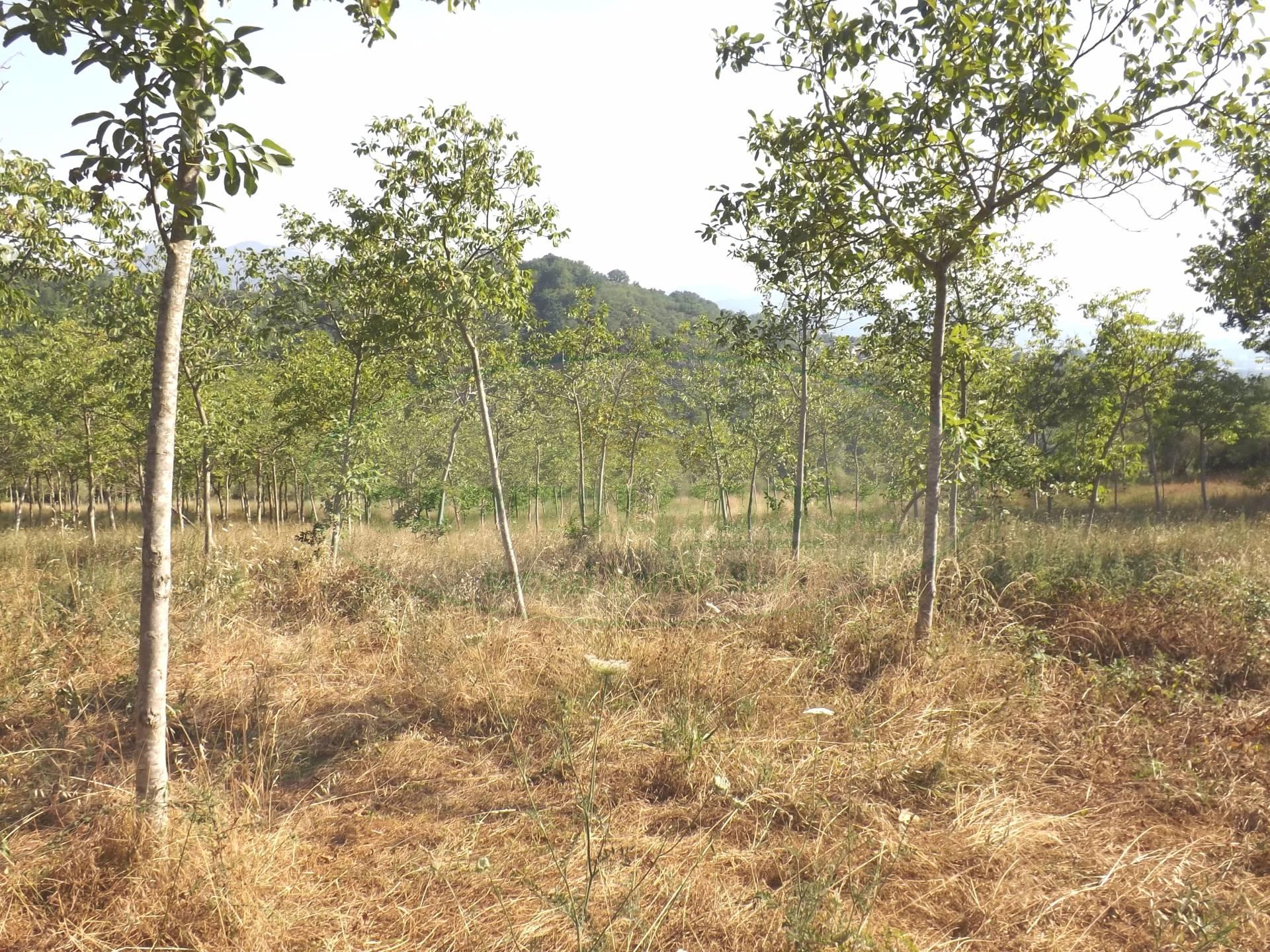 Terreno Agricolo in vendita a Santo Stefano del Sole, 9999 locali, prezzo € 160.000 | CambioCasa.it