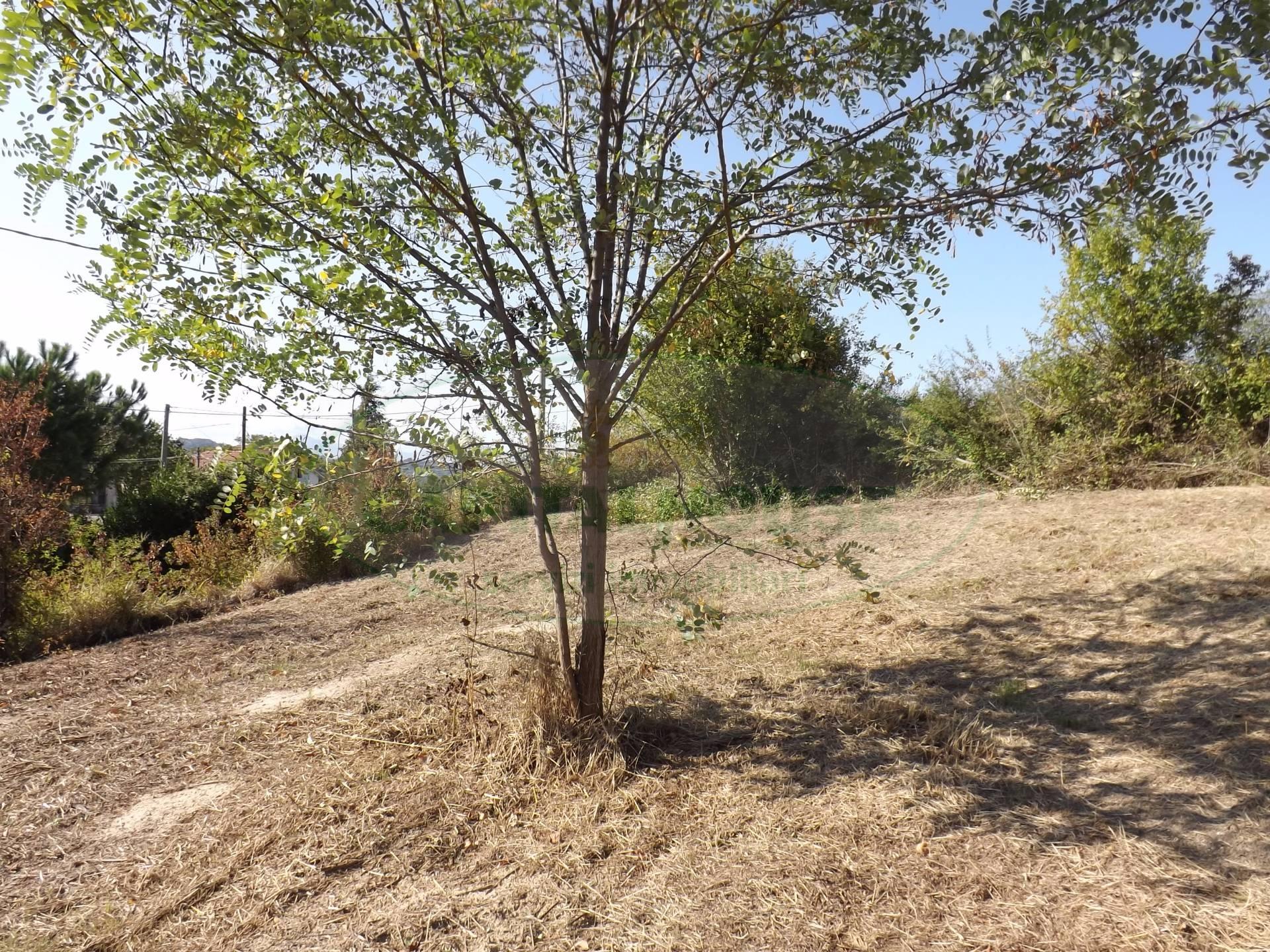 Terreno Agricolo in vendita a Manocalzati, 9999 locali, prezzo € 26.000 | CambioCasa.it