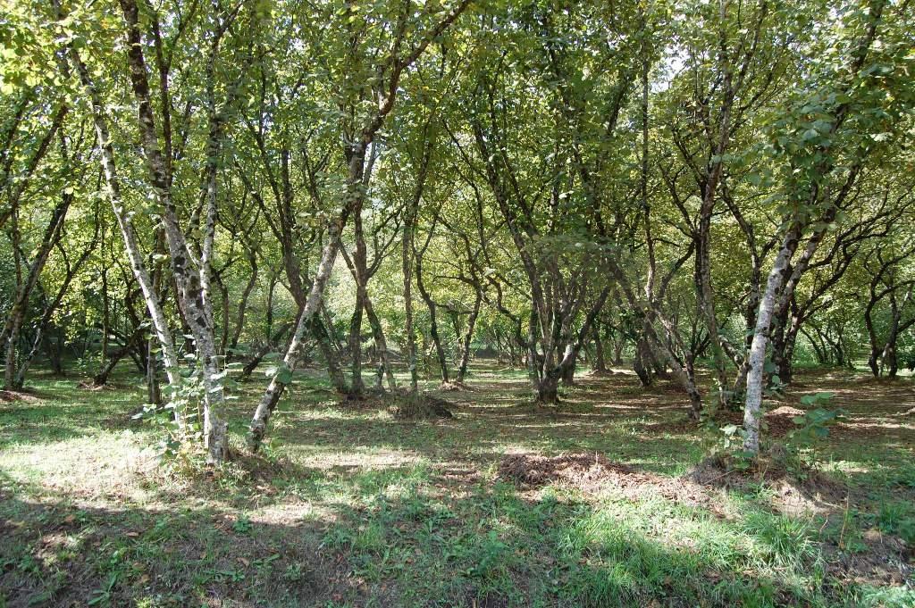 Terreno Agricolo in Vendita a Monteforte Irpino