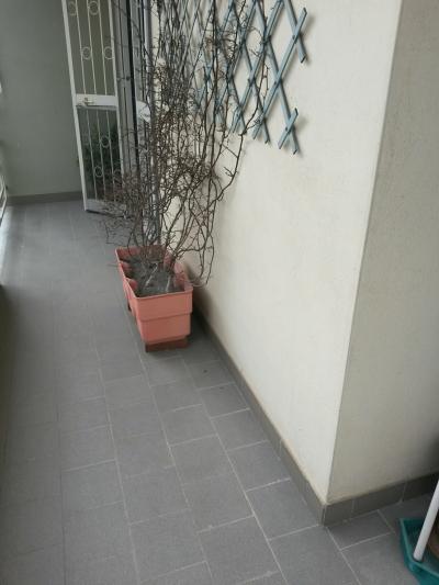 Vai alla scheda: Appartamento Affitto - Portico di Caserta (CE) - Rif. 325€PORTICOARRED