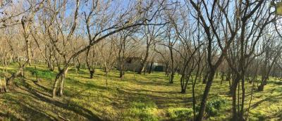 Vai alla scheda: Terreno Agricolo Vendita - Avella (AV) - Rif. 8366