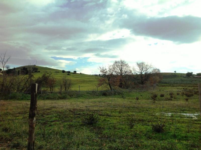 Terreno Agricolo in Vendita a Magliano in Toscana