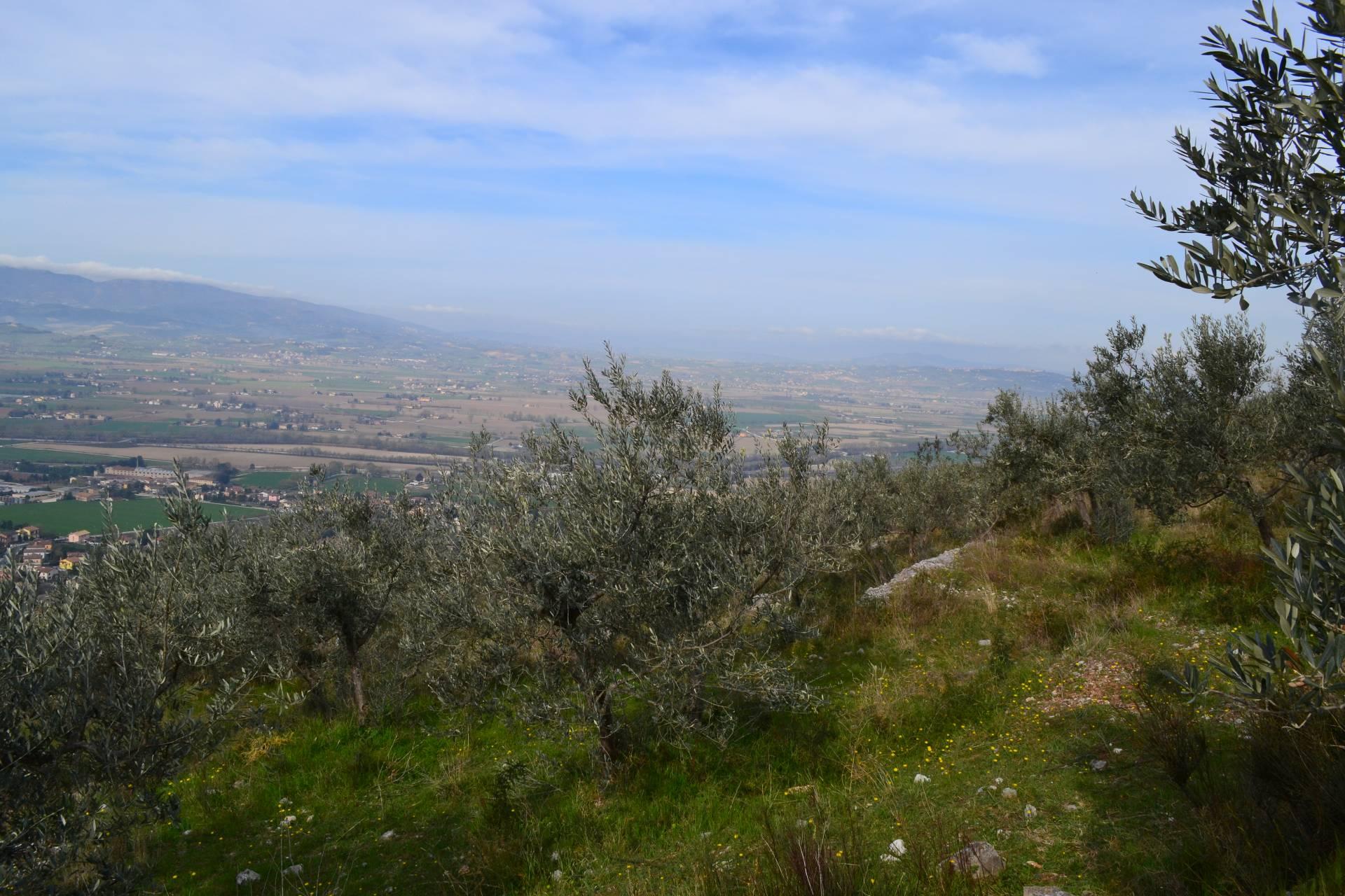 Terreno Agricolo in vendita a Campello sul Clitunno, 9999 locali, zona Zona: Castello, prezzo € 35.000 | CambioCasa.it