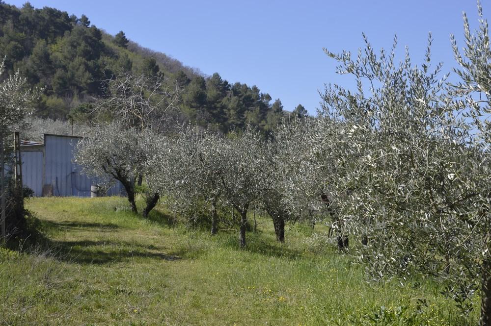 Terreno Edificabile Residenziale in vendita a Spoleto, 9999 locali, prezzo € 80.000   CambioCasa.it