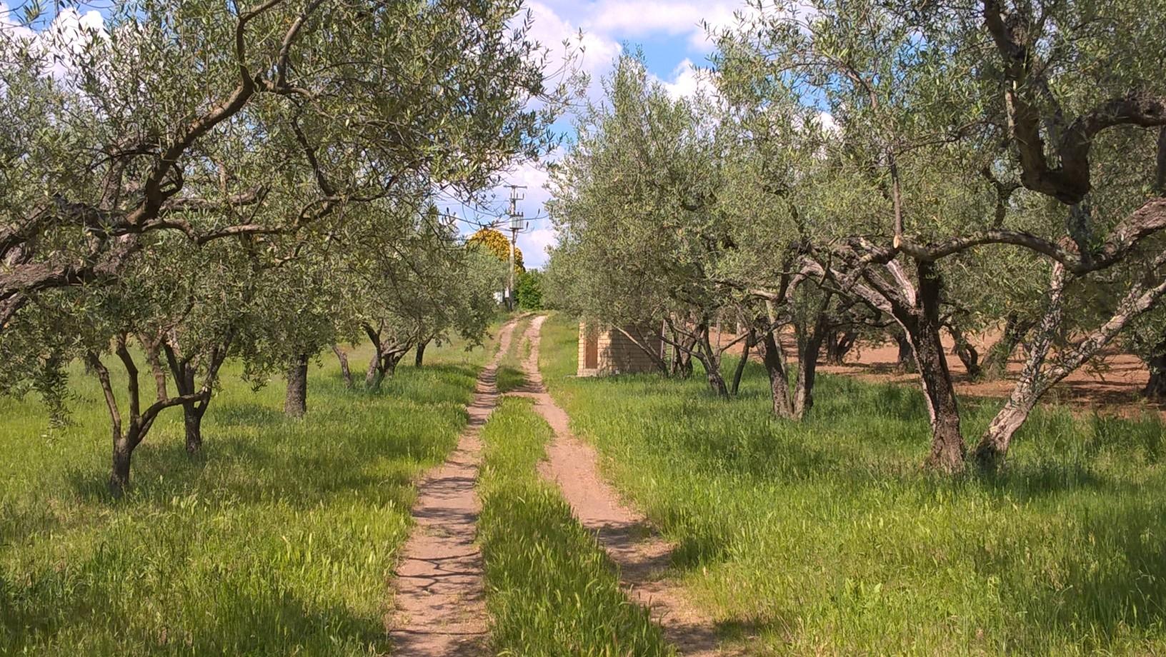 Terreno Agricolo in Affitto a Viterbo