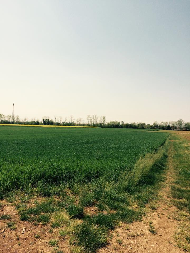 Terreno Agricolo in vendita a Ponzano Veneto, 9999 locali, prezzo € 175.000   CambioCasa.it