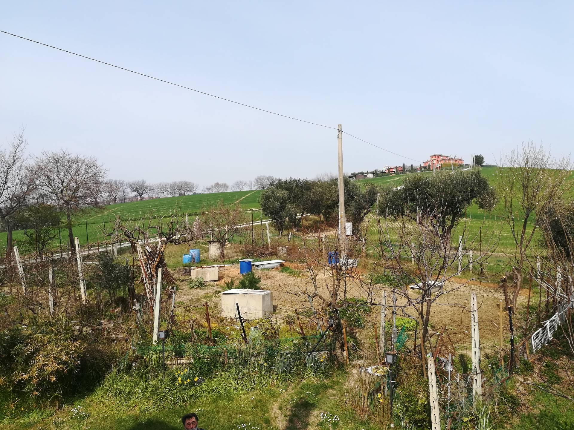 Terreno agricolo in vendita a Polverigi (AN)