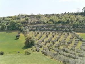 Terreno Agricolo in Vendita<br>a Montefiore dell'Aso