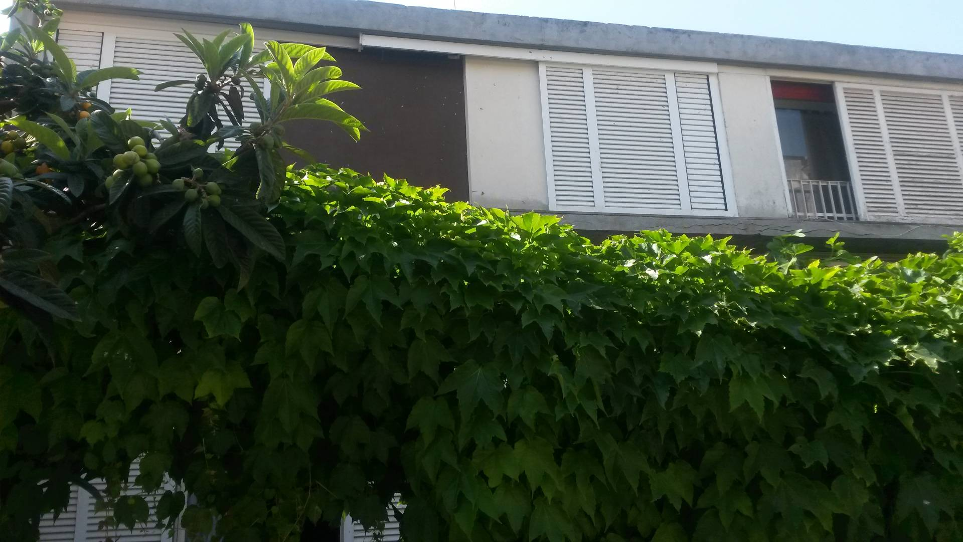 APPARTAMENTO in Affitto a Sessa Aurunca (CASERTA)