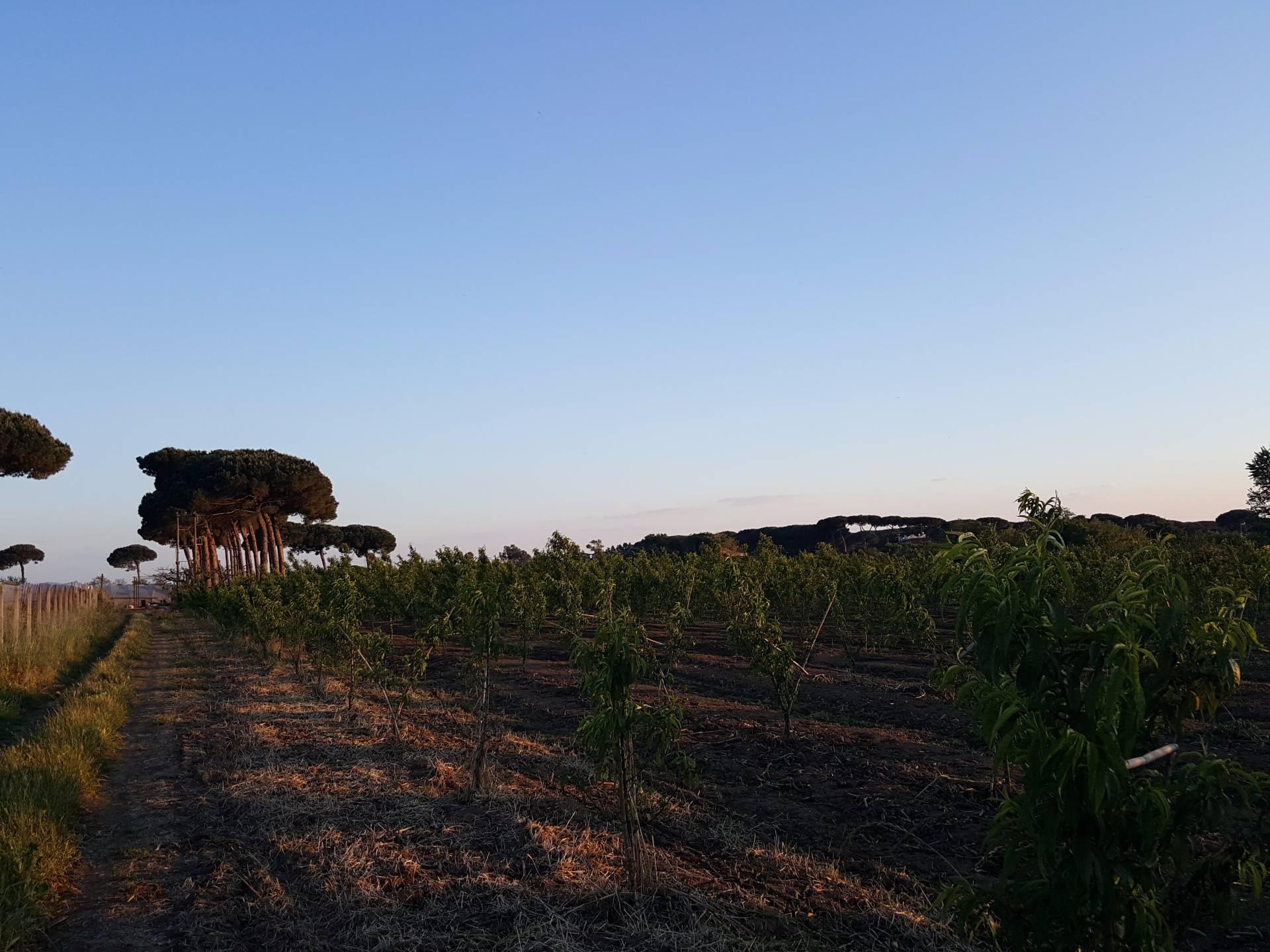 Terreno Agricolo in vendita a Giugliano in Campania, 9999 locali, prezzo € 15.000   CambioCasa.it
