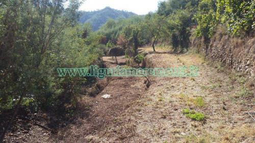 Terreno Agricolo in Vendita a Savona