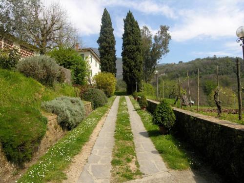 <span>Camaiore</span>