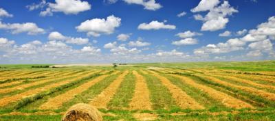 Terreno Agricolo in Vendita a Gorla Maggiore