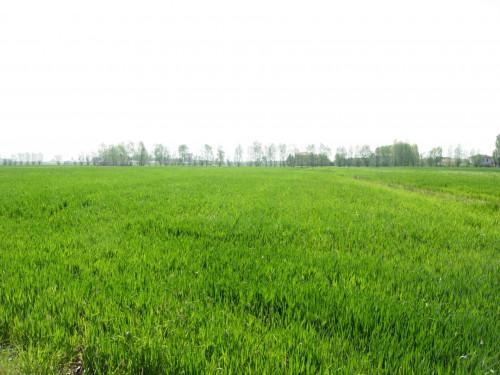 Terreno edificabile in Vendita a Fagnano Olona
