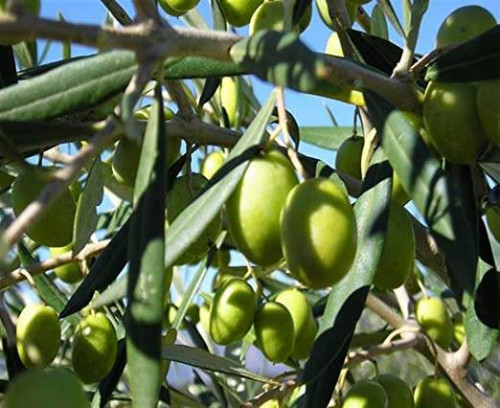 Terreno Agricolo in Vendita a Canosa di Puglia