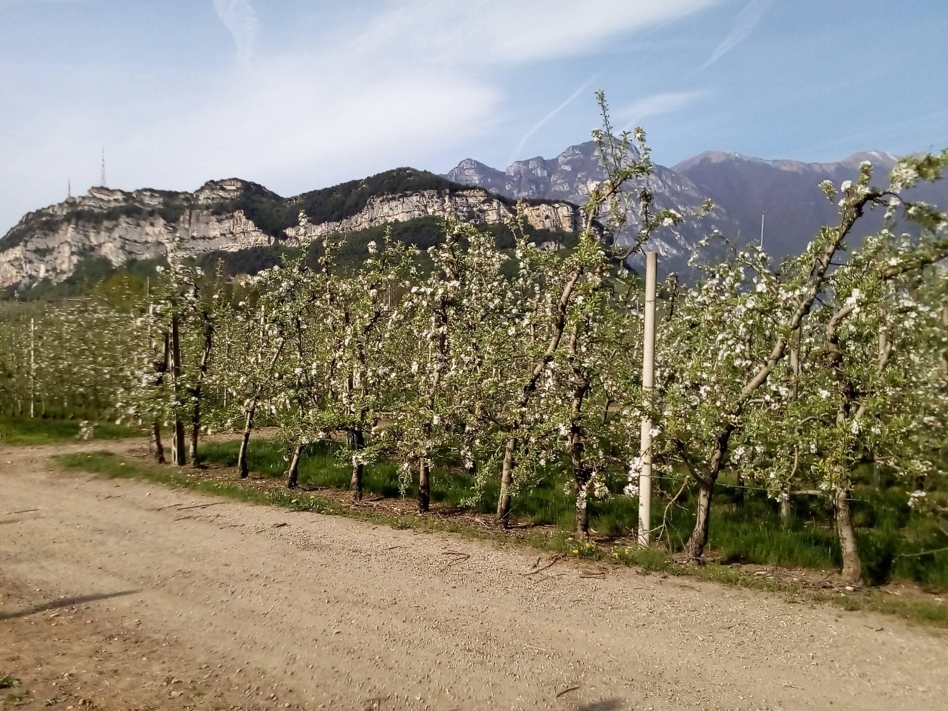 Terreno Agricolo in vendita a Arco, 9999 locali, prezzo € 160.000 | Cambio Casa.it