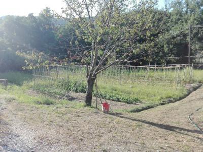 Villa singola a Vicopisano (3/5)