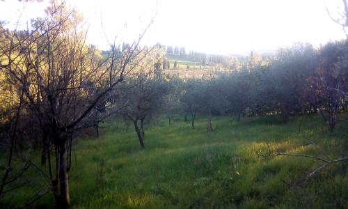 Villa singola a Collesalvetti (1/5)