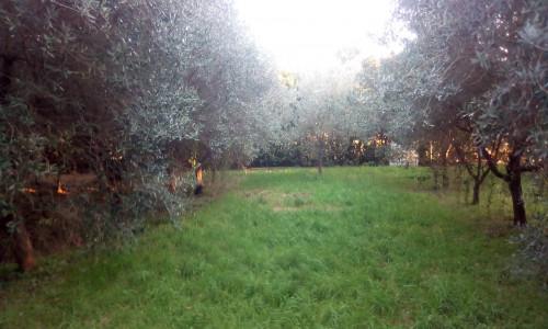Villa singola a Collesalvetti (2/5)