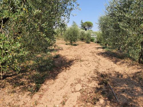 Terreno agricolo a Santa Maria a Monte (1/2)