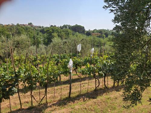 Terreno agricolo a Santa Maria a Monte (2/2)