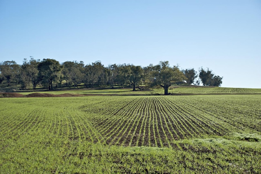 Terreno Agricolo in vendita a Barzana, 9999 locali, prezzo € 100.000 | CambioCasa.it