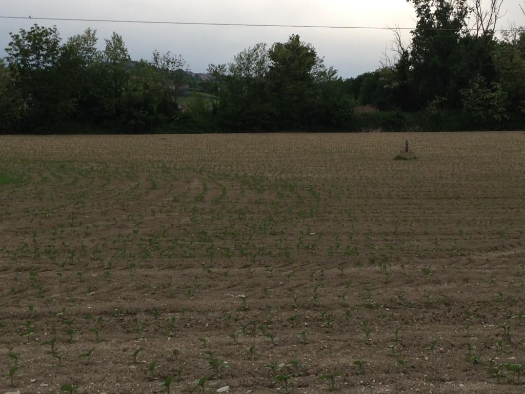 Terreno Agricolo in vendita a Montegiorgio, 9999 locali, prezzo € 1.247.000 | Cambio Casa.it
