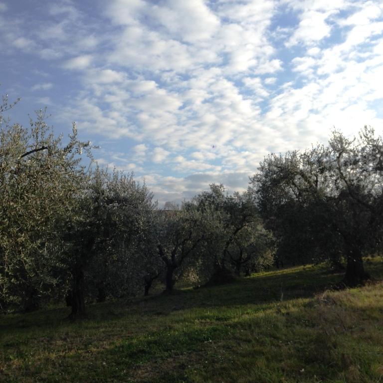 Soluzione Indipendente in vendita a Monteleone di Fermo, 9 locali, prezzo € 245.000 | Cambio Casa.it