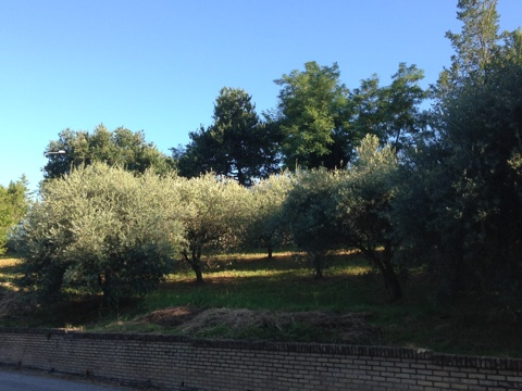 Terreno Edificabile Residenziale in vendita a Montegiorgio, 9999 locali, prezzo € 65.000 | Cambio Casa.it