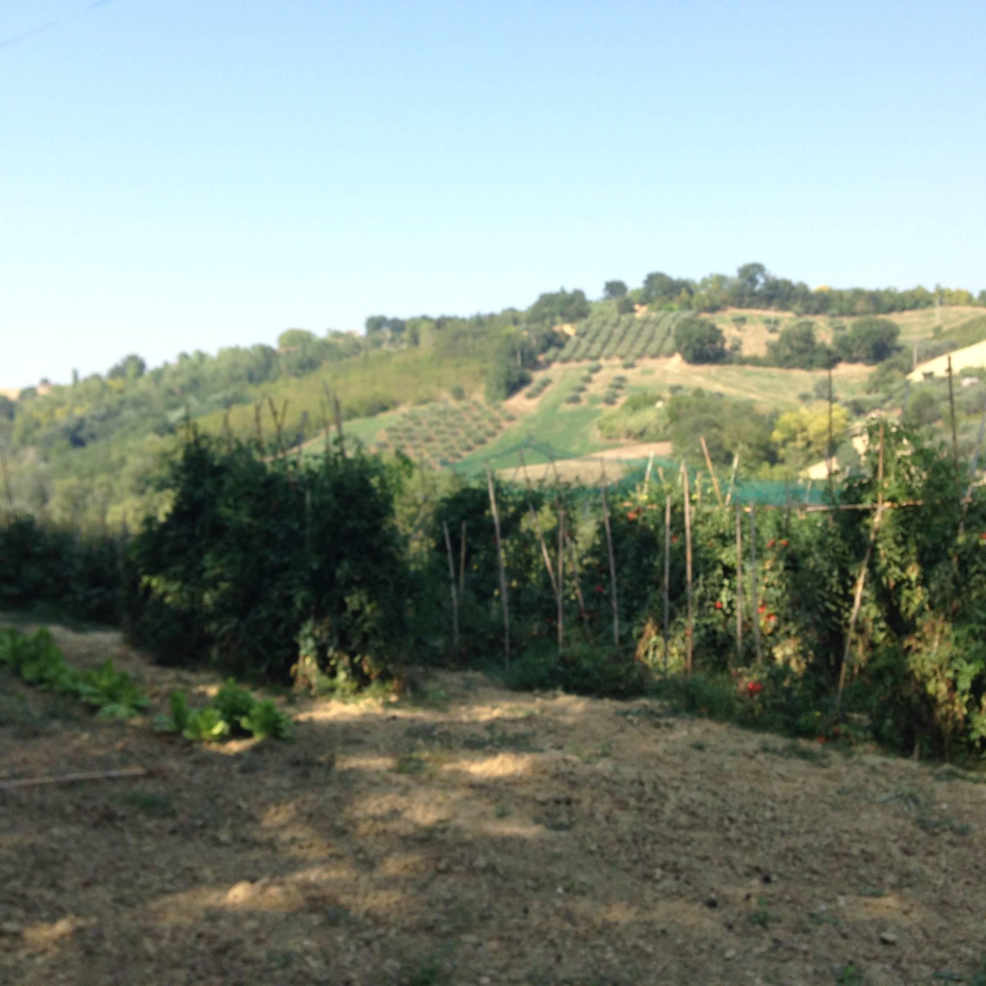 Terreno Agricolo in vendita a Magliano di Tenna, 9999 locali, prezzo € 25.000 | Cambio Casa.it