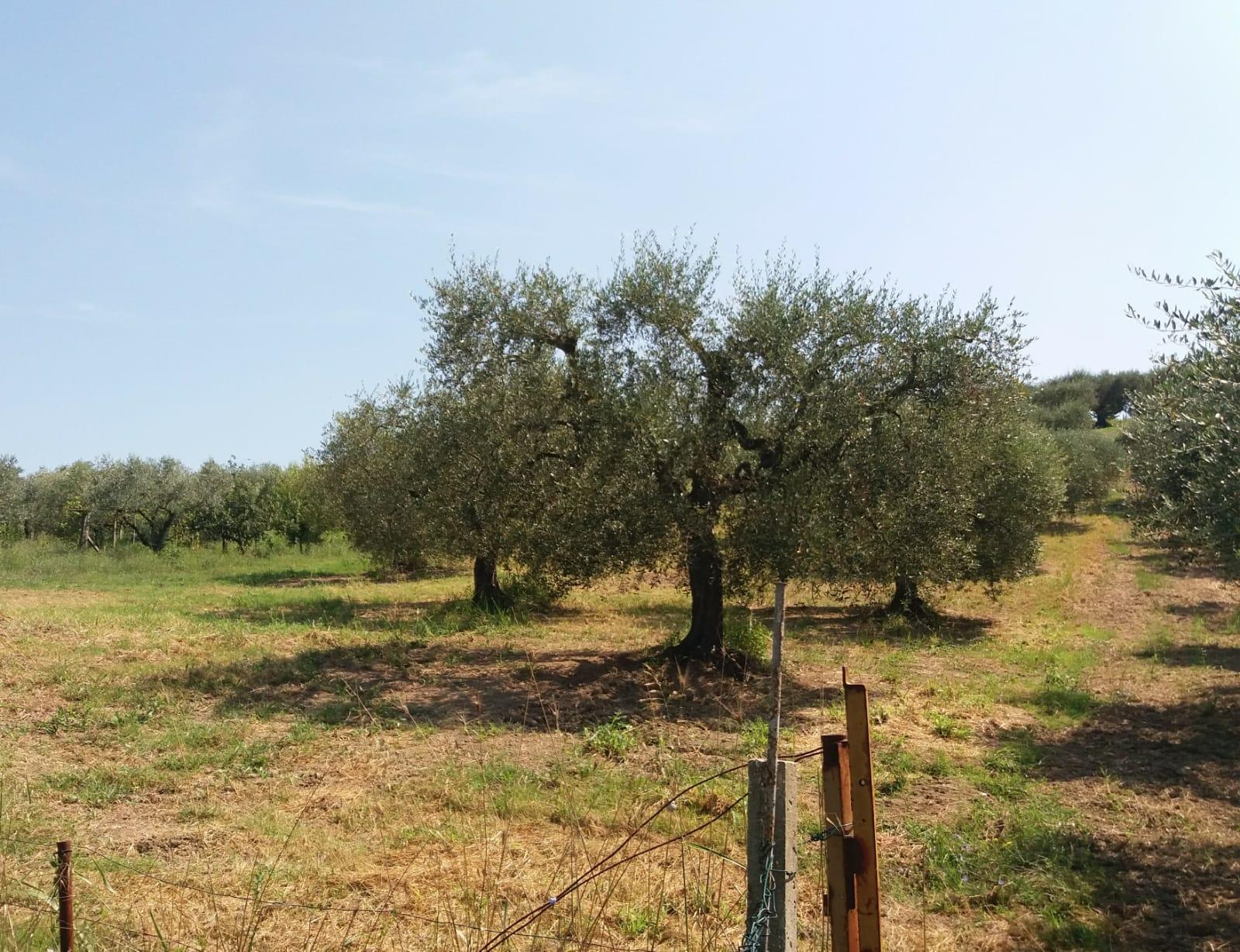 Terreno Agricolo in vendita a Fonte Nuova, 9999 locali, prezzo € 62.000 | CambioCasa.it