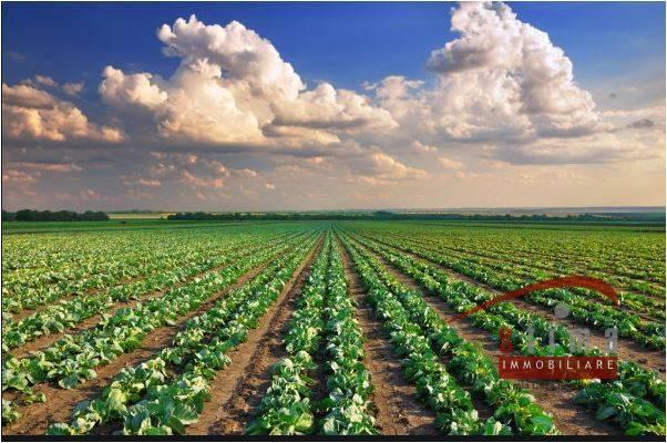 Terreno Agricolo in vendita a Noto, 9999 locali, prezzo € 2.200.000   CambioCasa.it