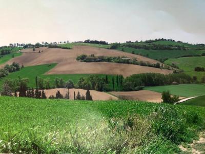 Terreno Agricolo in Vendita a Montecassiano