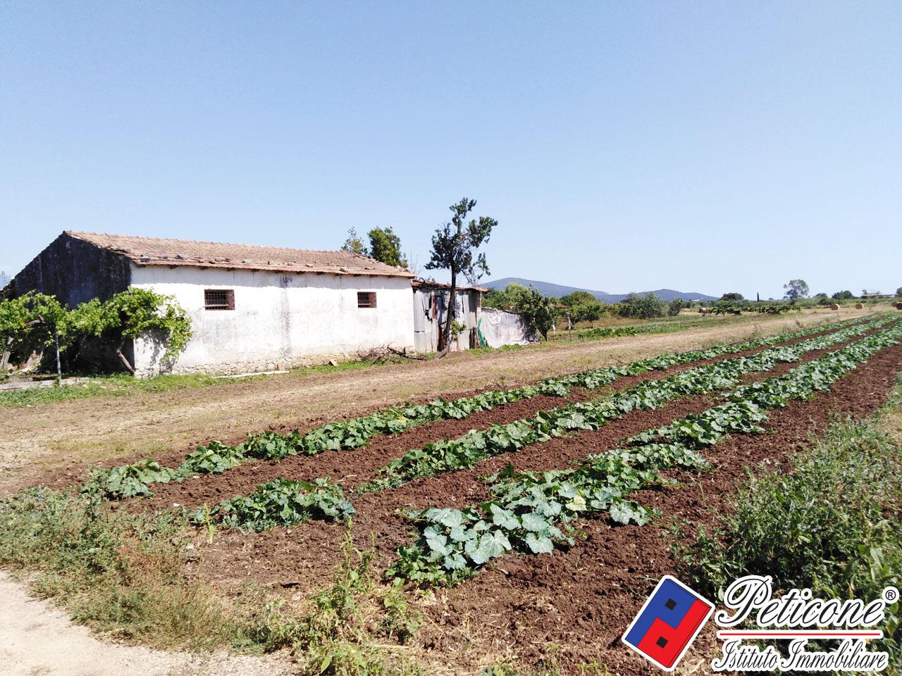 Terreno Agricolo in Vendita a Fondi