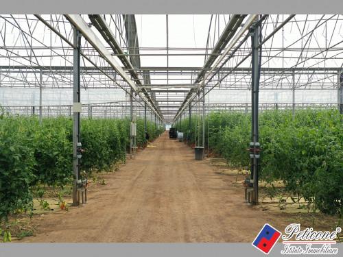 Azienda Agricola di 21 Ettari - Già in Attività