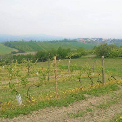 Azienda Agricola in Vendita a Ozzano Monferrato