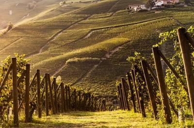 Terreno Agricolo in Vendita a Barolo