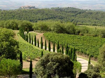Casale in Vendita a Montalcino