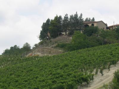 Azienda Agricola in Vendita a Acqui Terme