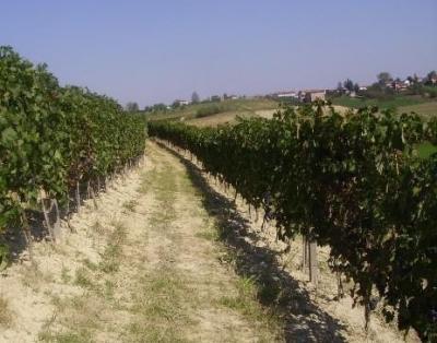 Azienda Agricola in Vendita a Grana