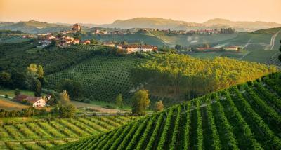 Terreno Agricolo in Vendita a Nizza Monferrato