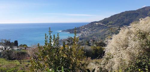 Terreno Agricolo in Vendita a Ventimiglia