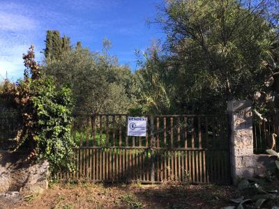 Vai alla scheda: Terreno Agricolo Vendita - Tortolì (OG) - Codice -50/19